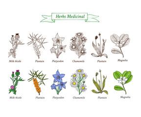 Set of vector medicinal herbs, flowers