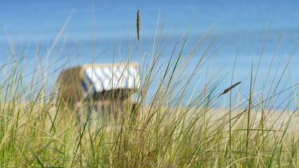Strandhafer und Strandkorb an der Ostsee