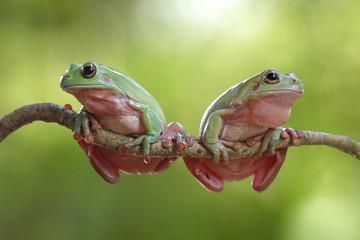 Dumpy frog on branch