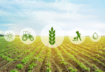 Icons and field on background. Concept of smart agriculture and modern technology