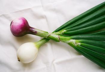 Fresh organic onion top view