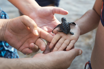 Sea small turtle on hand
