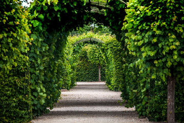 Green garden arches and path. Landscape gardening design in Rundale palace, Latvia Wall mural