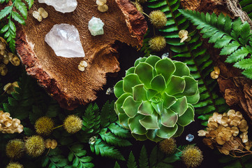 Ferns and Succulents