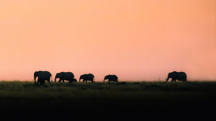 Wall Mural - Silhouette Elephants Walking at Sunset
