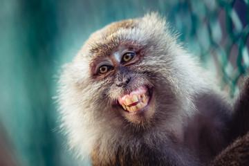One monkey smiling