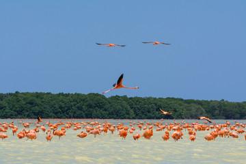 Flamencos rosados en la Ría Celestún Yucatán.