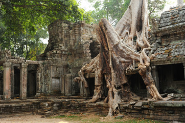 Old Buddhist monastery with large tree roots growing on roof,Cambodia.