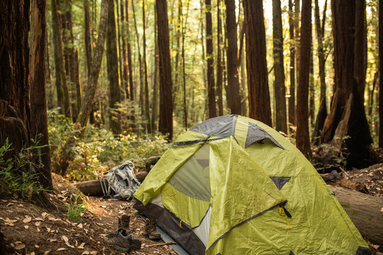 Tent under a dense redwood forest in a California campground