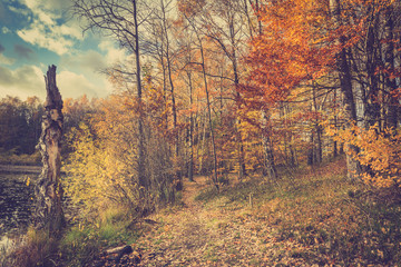 Scenic autumn landscape with forest path between trees and bushes with red leaves on branches, toned image