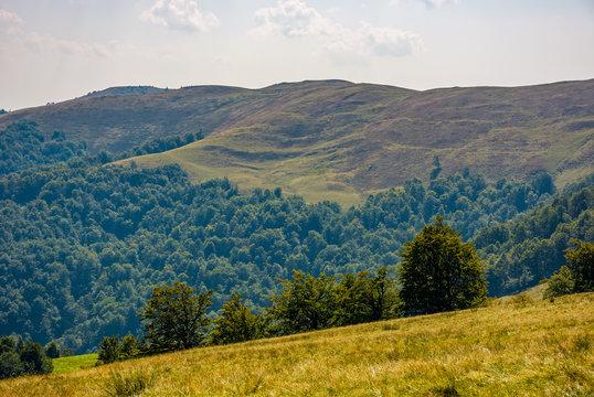 beech forest on grassy hillside in autumn