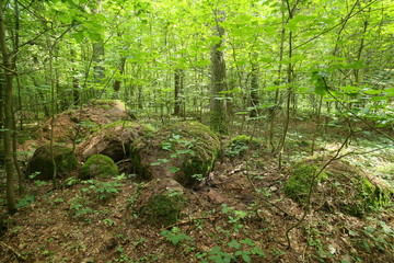 Remains of the megalithic tomb Forst Poggendorf 2 in Mecklenburg-Vorpommern, Germany