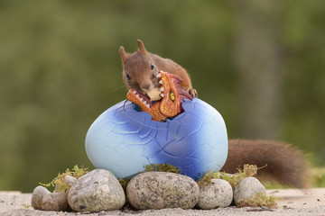 squirrel feeding a dragon