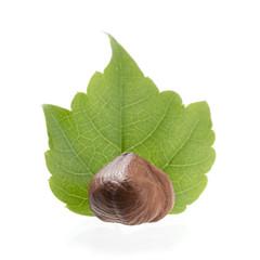 Hazelnut Over Leaf