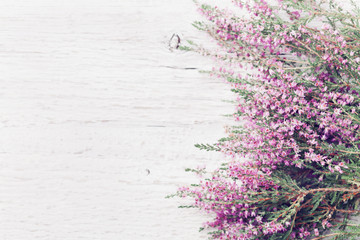 Pink heather flower border (calluna vulgaris, erica, ling) on white rustic table overhead view. Greeting card in vintage style.