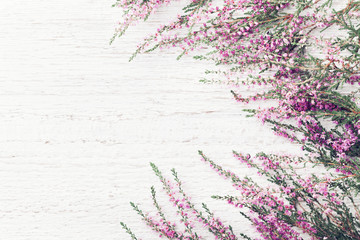 Beautiful pink flower heather frame (calluna vulgaris, erica, ling) on white rustic background top view.