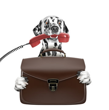 cute office worker businessman dog with suitcase or bag isolated on white