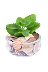 Plant growing on full of coins in a jar