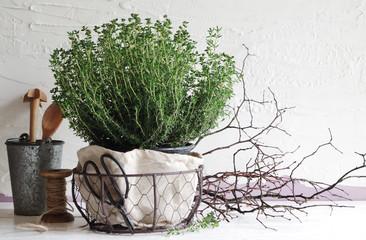 Thymianpflanze (Stillleben)