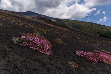 Etna highest Volcano of Europe in Sicilia Italy