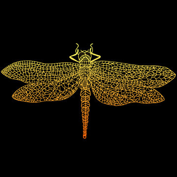 Decorative, beautiful, graceful dragonfly, stypunk style, rusty color outline, cartoon insect, isolated on black background.