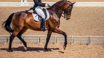 Bay horse portrait during dressage competition. Dressage horse, advanced dressage test.