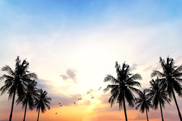 Coconut seaside landscape in the sunset (sunrise),Vintage filters, background silhouettes.