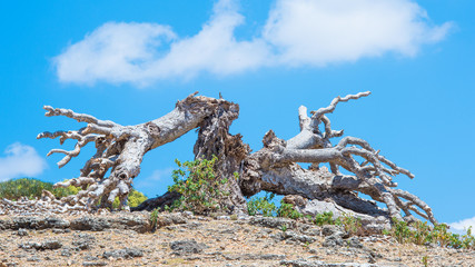 Nature of the Socotra Archipelago, Yemen