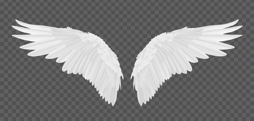 Vector realistic angel wings isolated on transparent background Wall mural