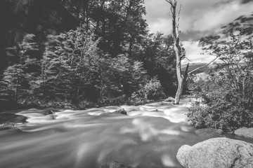 Black and white photograph of a mountain river. Shevelev.