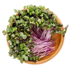 Red cabbage sprouts in wooden bowl. Leaves and cotyledons of Brassica oleracea, also purple cabbage, red or blue kraut. Vegetable. Microgreen. Isolated macro food photo close up from above over white.