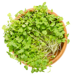 Rocket salad sprouts in wooden bowl. Leaves and cotyledons of Eruca sativa, also arugula, rucola or rugula.Salad vegetable and microgreen. Isolated macro food photo close up from above over white.