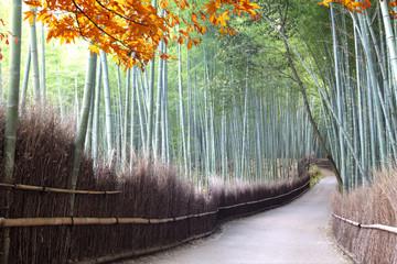 bamboo forest of Arashiyama near Kyoto at the fall season, Japan