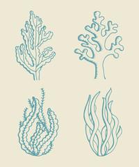 Seaweed vector sketch set