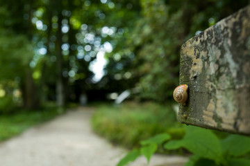 Slug in a Botanic Garden