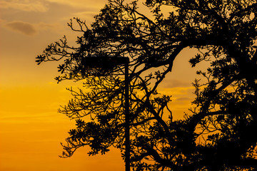 Silhouette of trees on colorful sunset,  tree silhouette at orange sunset sky.