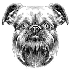 dog breed Brussels Griffon vector graphics monochrome sketch
