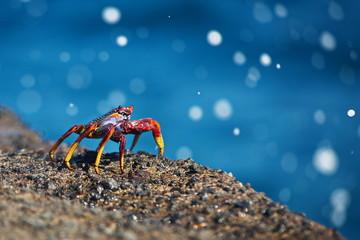 crab ocean