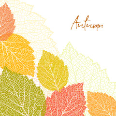 Autumn background and leaves