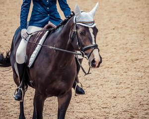 Black horse portrait during dressage competition. Dressage horse, advanced dressage test.