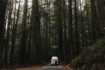 camper van going into tall forest