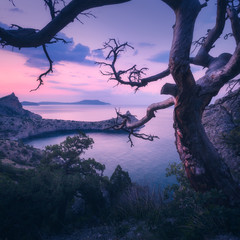 Wall Mural - Amazing old tree in crimean mountains at sunrise. Colorful landscape with tree, rock, sea and purple sky in the morning. Summer forest in mountains at dusk. Travel. Nature background. Beautiful coast