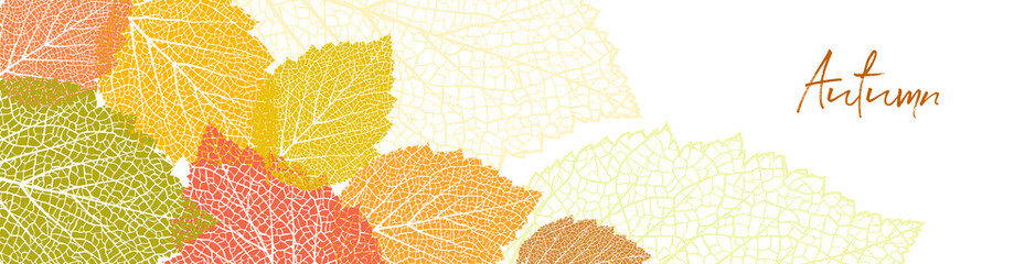 Bright autumn background with  leaves