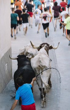 Bulls that run for the street