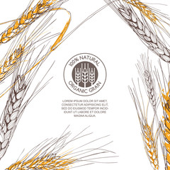 Vector background for label, package. Hand drawn sketch illustration of wheat and logo design. Concept for organic flour, harvest and agriculture, grain, cereal products, bakery, healthy food.