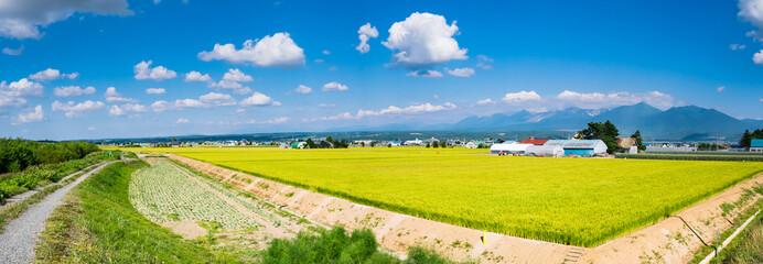 北海道 富良野 田園風景