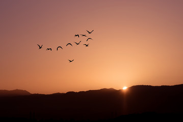 Birds at sunrise autumn or spring concept