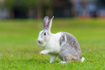rabbit on green grass