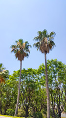 Beautiful palms view on blue sky background, colorful nature wallpaper