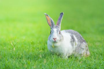 rabbit on green grass in summer day